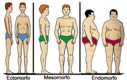biotipos-corporales