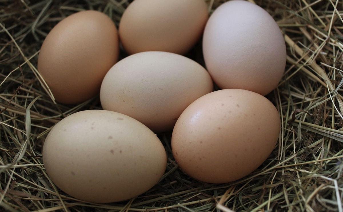 canasta-de-huevos