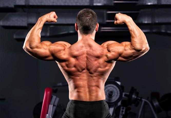 crecimiento-de-musculos-espalda