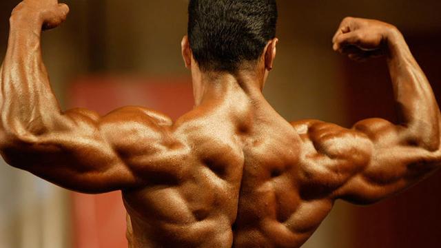 espalda-musculos