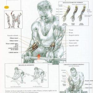 antebrazo_banca_ejercicio_simetria_cuerpo_salud_beneficios_fitness