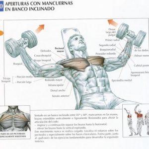 fly_inclinado_pectorales_ejercicio_rutina_hipertrofia
