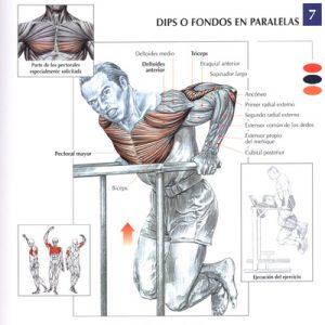fondos_pectorales_ejercicio_rutina_hipertrofia