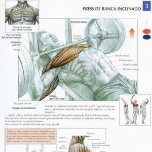 inclinado_pectorales_ejercicio_rutina_hipertrofia