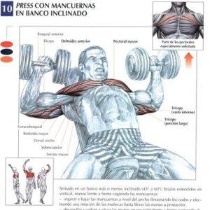 inclinadoduro_pectorales_ejercicio_rutina_hipertrofia