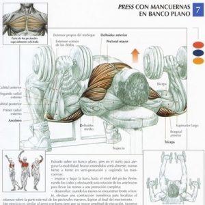 mancuerna_pectorales_ejercicio_rutina_hipertrofia
