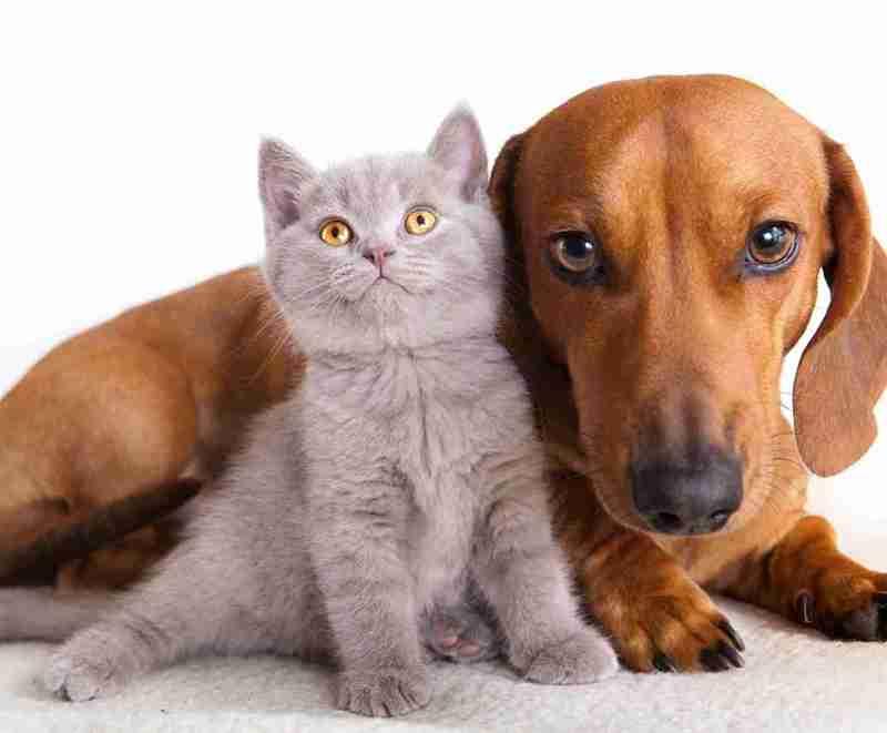 mascotas-perros-gatos