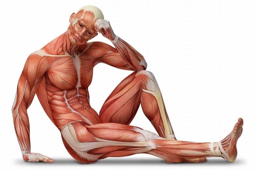 Músculos grandes y pequeños, tips que debemos entender - La Revista IN