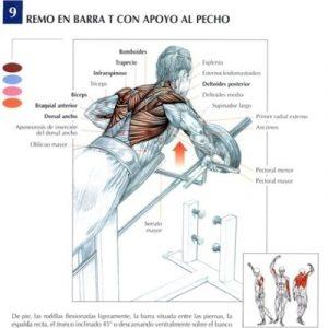 pesas_olimpicos_ejercicio_tendencia_salud