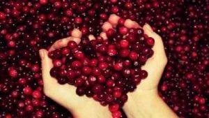 piel firme, arandano, extracto de fruta